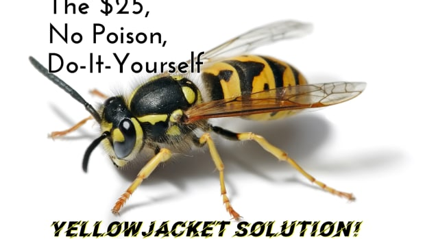 remove-yellow-jacket-and-ground-wasp-nests-cheap-without-poison