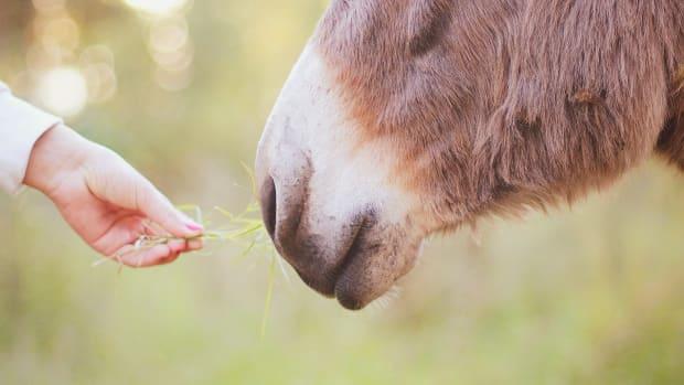 elder-smith-and-the-donkey