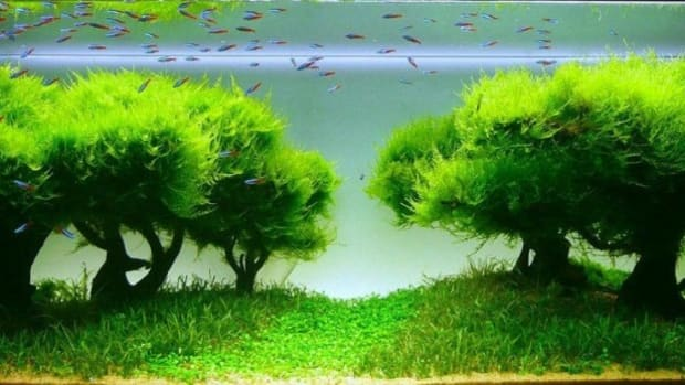 fish-tank-and-fish-pond-accessories-aquarium-accessories