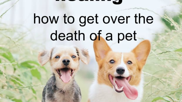 7-ways-to-heal-your-heart-when-your-pet-dies