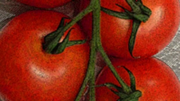 tomato-press