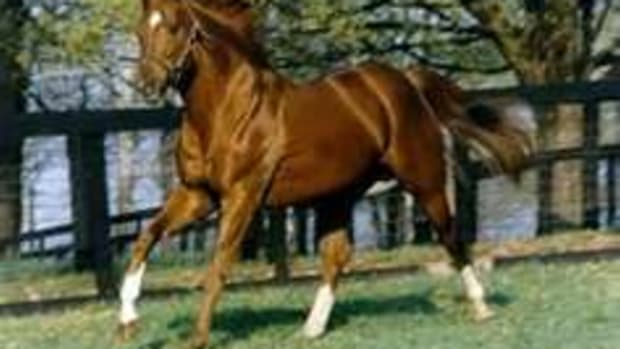 secretariat-poetry-in-motion