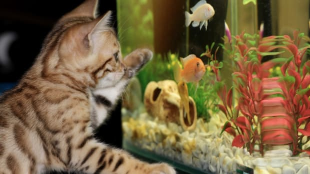 the-psychology-and-understanding-of-aquarium-fish