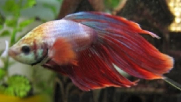 five-best-betta-fish-tanks-aquarium-reviews