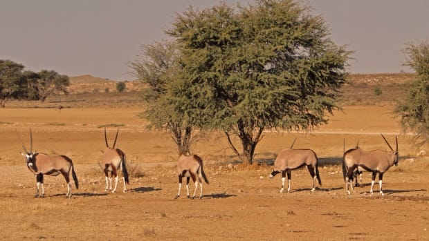 africa-landscapes-from-south-africa-the-scenery