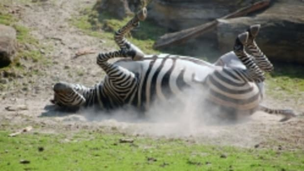 best-zebra-gifts