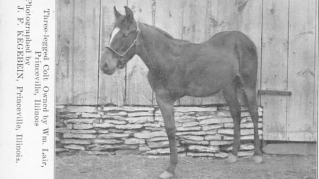 three-legged-horses