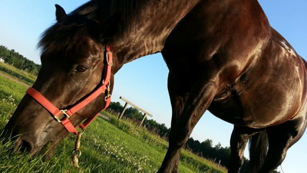 horses-and-their-sense-of-taste