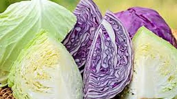 4-types-of-cabbage