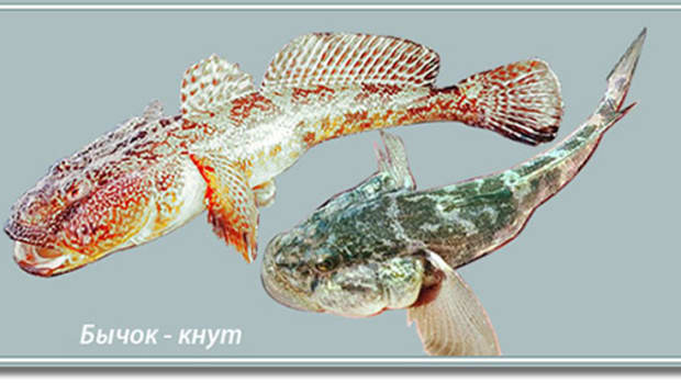 fish-and-fishing-motives-in-the-environmental-sculpture-of-berdiansk-ukraine