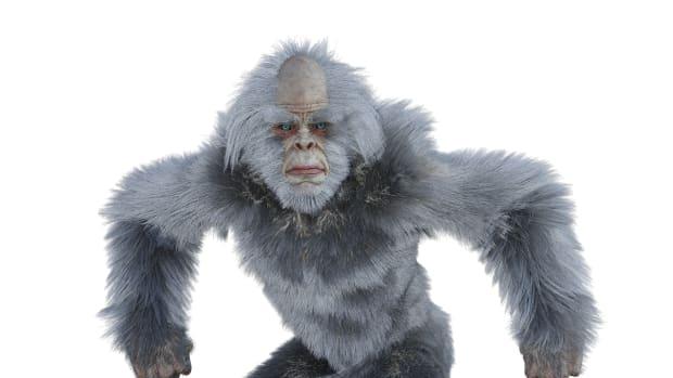 bigfoot-encounters