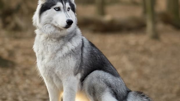 most-sought-after-dog-breeds