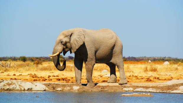 botswanas-mysterious-elephant-death-revealed
