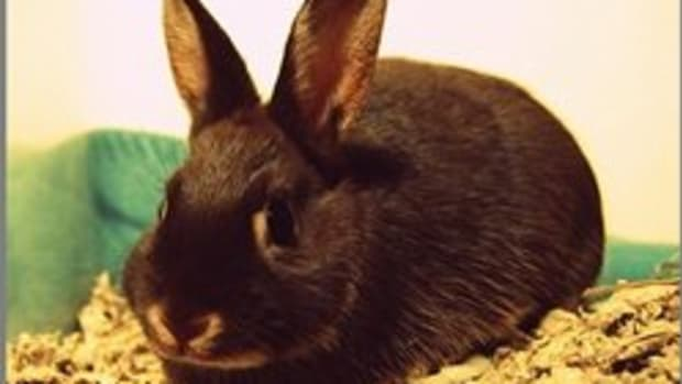pet-rabbit-2