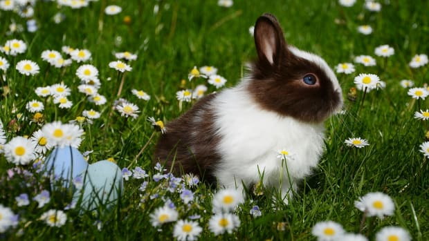 how-to-give-oral-medicine-to-your-bunny-rabbit