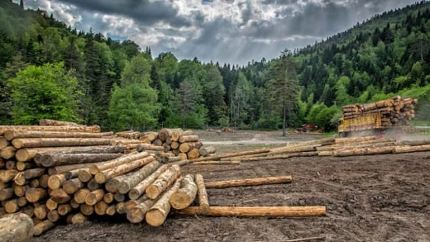 types-of-forestry
