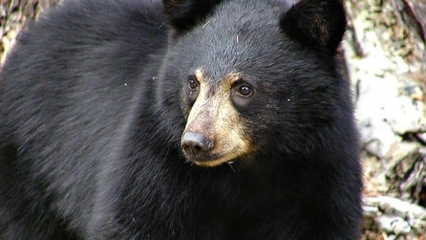 top-10-most-dangerous-animals-in-california