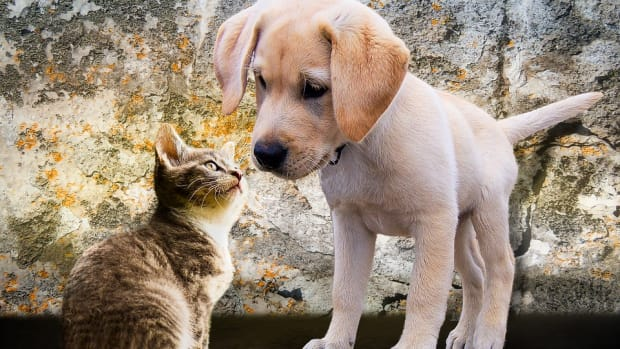 cats-and-dogs-together