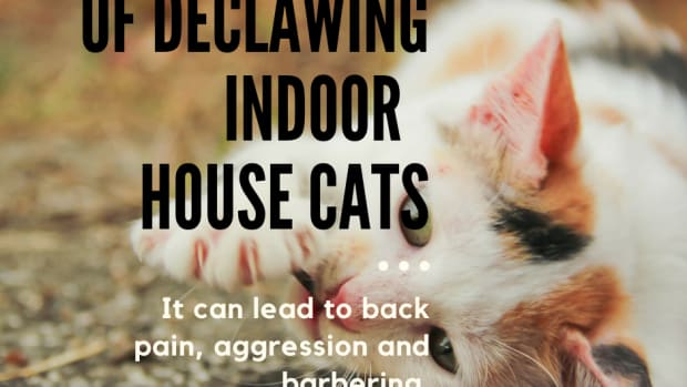 is-declawing-cats-common-practise