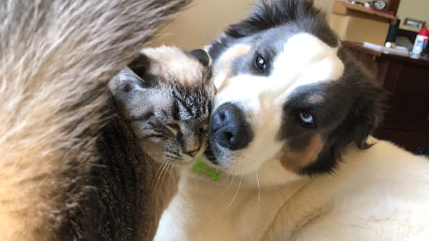 myth-cats-vs-dogs