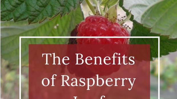 raspberry-leaves-herbal-remedies