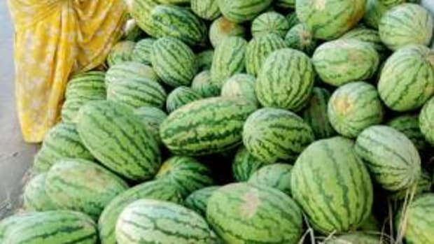 body-cooling-foods-to-eat-in-summer-body-cooling-fruits-vegetables-cereals-natural-body-coolants