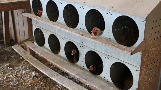 roller-egg-nesting-boxes-chicken-nest-box-chickens-processing