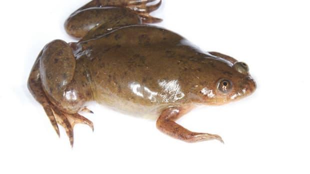 invasive-exotic-pet-list