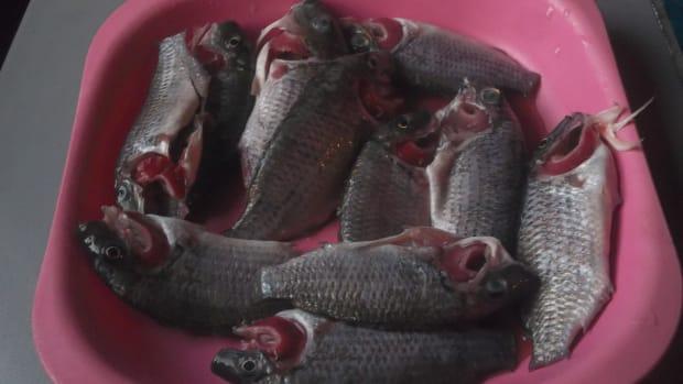 fish-chops