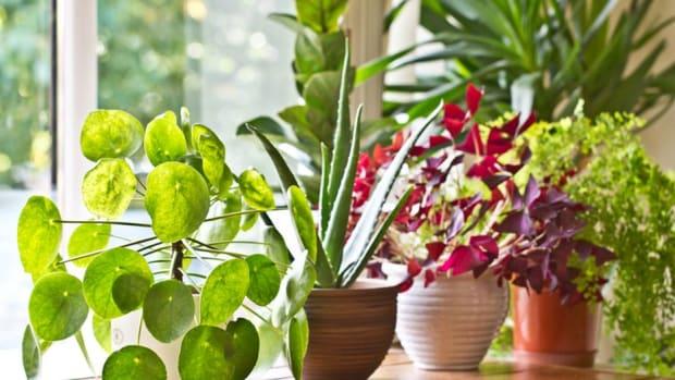 vastu-for-plants