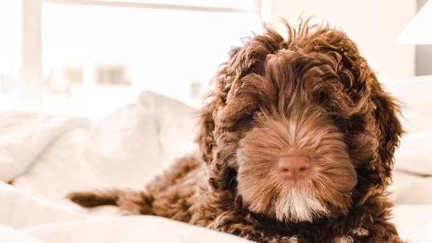 tips-to-keep-a-clean-home-with-pets