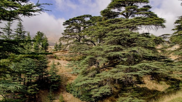 the-cedars-of-the-lord-in-lebanon
