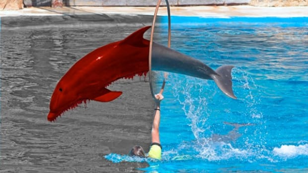 blooddolphins