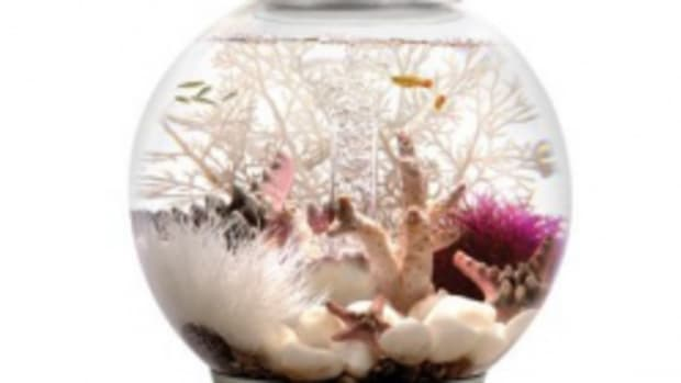 lets-make-a-girly-fish-bowl