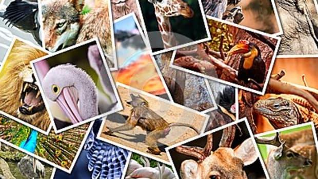 amazing-creative-animals