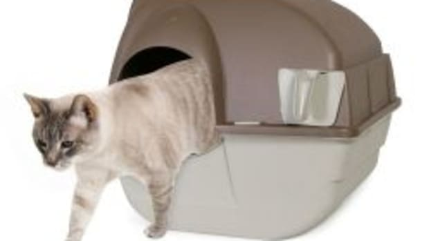 top-best-self-cleaning-cat-litter-boxes