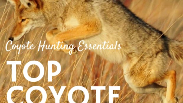 coyote-hunting-gear-3-best-predator-calls