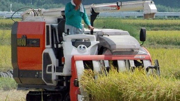 rice-harvest-in-japan