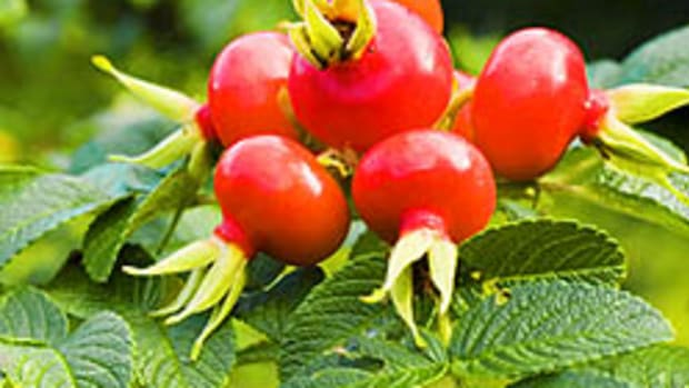 rose-hip-seed-oil