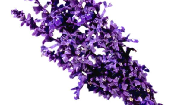 top-10-best-lavender-based-perfumes-or-fragrances-for-men-masculine-scents