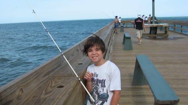 fiddler-crabs-for-bait