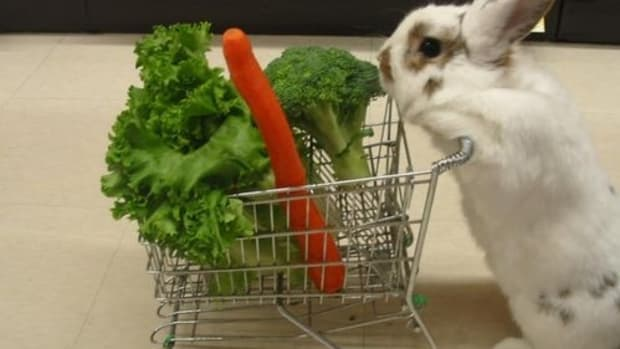 what-to-feed-rabbits