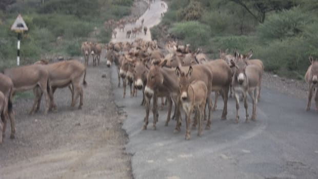 the-donkey-meetings-of-ole-tepesi