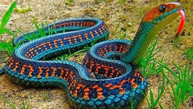 owning-a-pet-snake