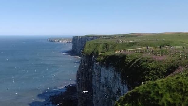 rspb-bempton-cliffs-nature-reserve-a-visitors-guide
