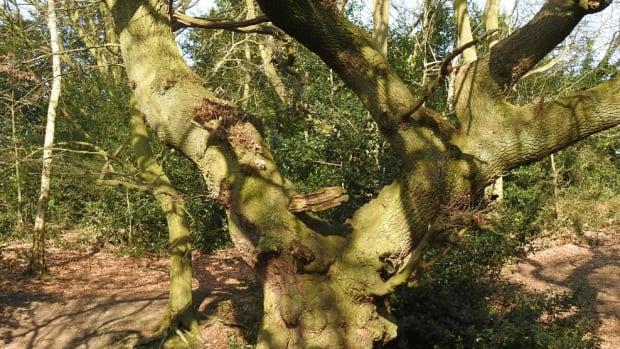 a-walk-around-moseley-bog-west-midlands-february