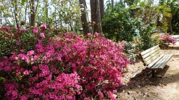 mercer-arboretum-and-botanic-gardens-in-humble-texas