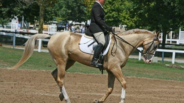 10-interesting-horse-breeds