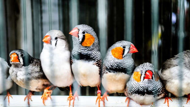 -cute-tiny-birds