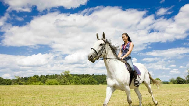 basic-supplies-every-first-time-horse-owner-needs